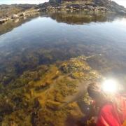 Τα εντυπωσιακά, κρυμμένα δάση της Αρκτικής