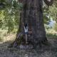 Πλάτανος ετών... 828: Ένα σπάνιο μνημείο της φύσης στη Θεσσαλονίκη