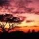 Το Σίδνεϊ κατέγραψε ρεκόρ θερμοκρασίας 53 ετών - Η θερμότερη νύχτα